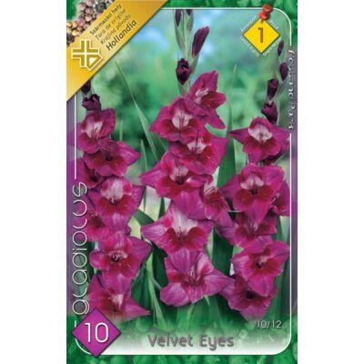 Kardvirág Gladiolus Velvet 10db/cs
