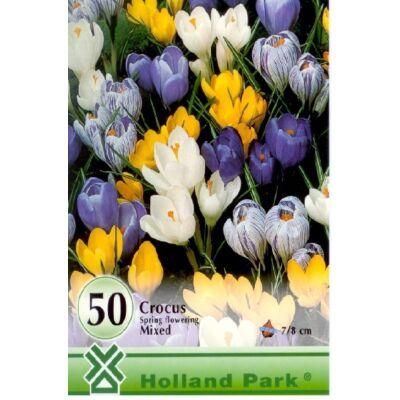 crocus virághagyma 50-db-os Vernus mix