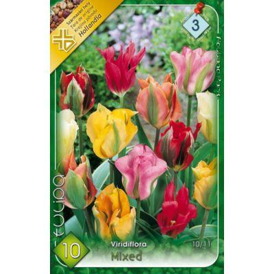 Tulipán virághagyma 10-db-os Viridiflora mix