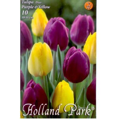 Tulipán virághagyma 10-db-os Duo Purple Yellow